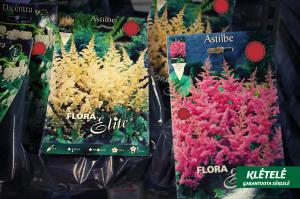 svogūninės gėlės 2